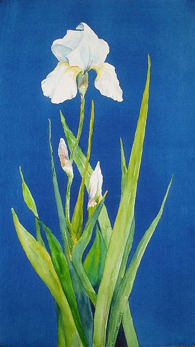 Marie-Spaeder-Haas-Artist-Something-Borrowed-Something-Blue-Hand-Paintings-608X1078