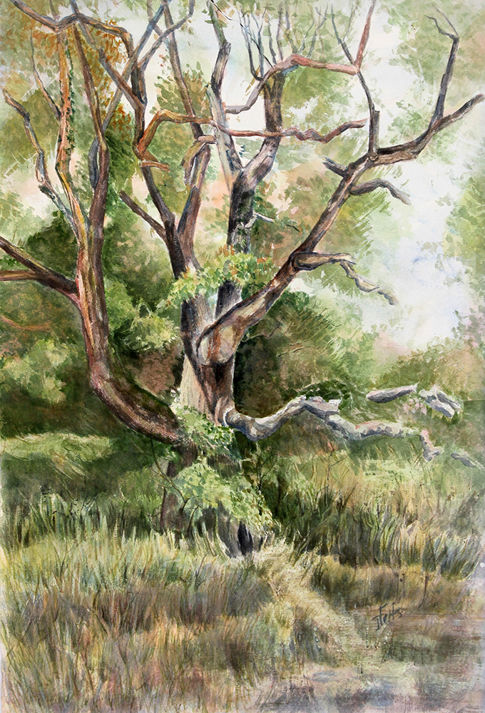 janet felts-grand old tree